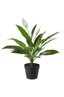 Stonleigh and Roberson Artificial Peace Lily