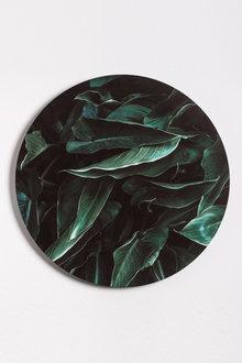 Arum Botanical Canvas