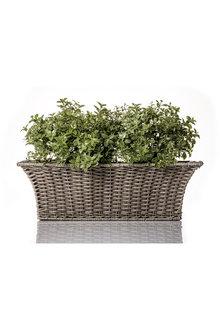 Elton Trough Planter