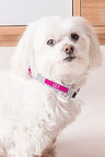 Personalised Pet Collar