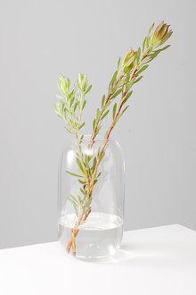 Isola Glass Vase - 254585