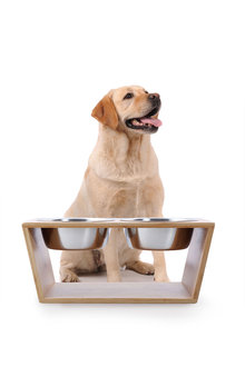 Charlies Pet Natural Bamboo Pet Feeder with Stainless Steel Bowls - 292464