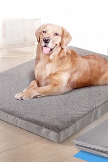 Paws Dog Bed - 295415