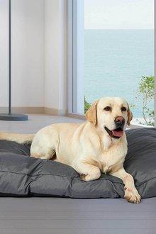 Paws All Season Waterproof Memory Foam Pet Mattress - 295485