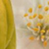 Jasmine & Ylang Ylang