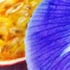 Iris & White Water